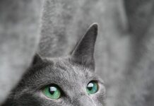 czy można kąpać kota