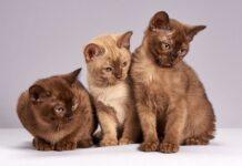 czym odstraszyć koty